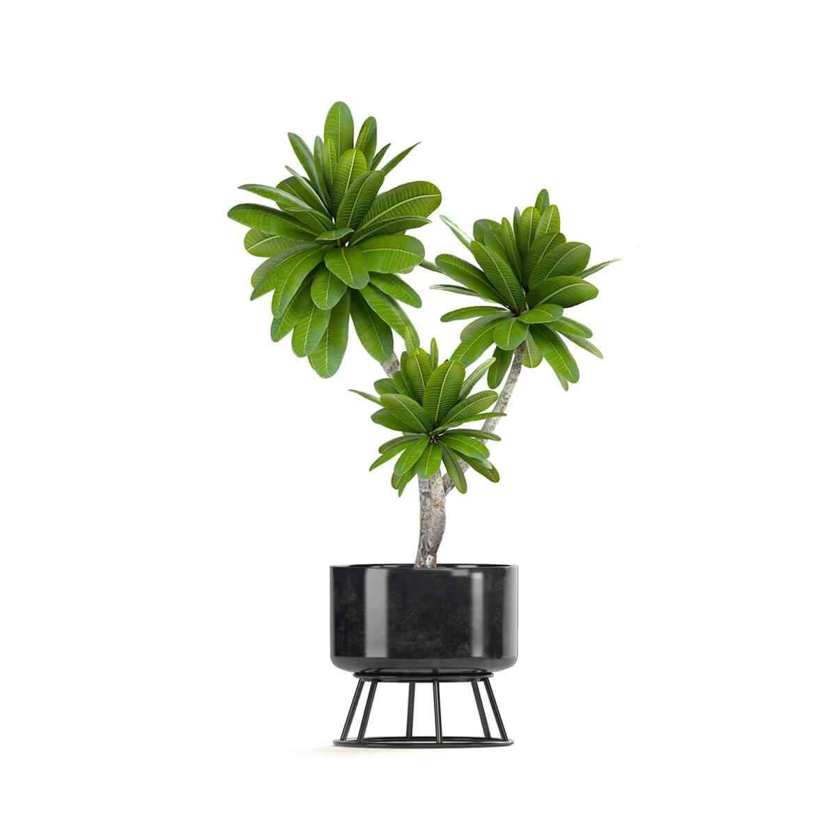 https://greenshade.com.au/wp-content/uploads/2018/09/product_08.jpg