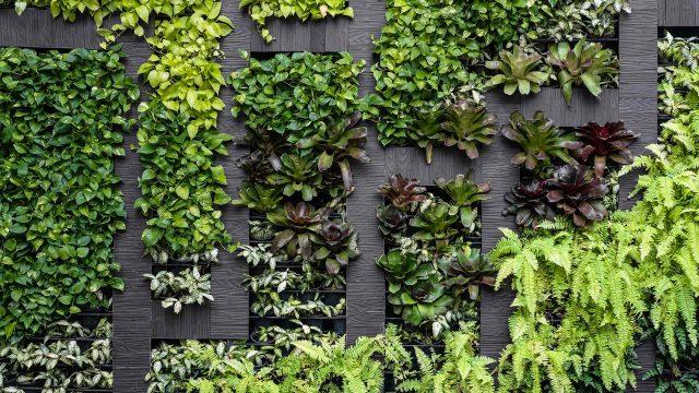 https://greenshade.com.au/wp-content/uploads/2019/10/post_11-640x360.jpg
